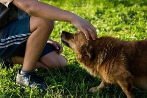 caresse d'un chien qui utilise un collier petsafe