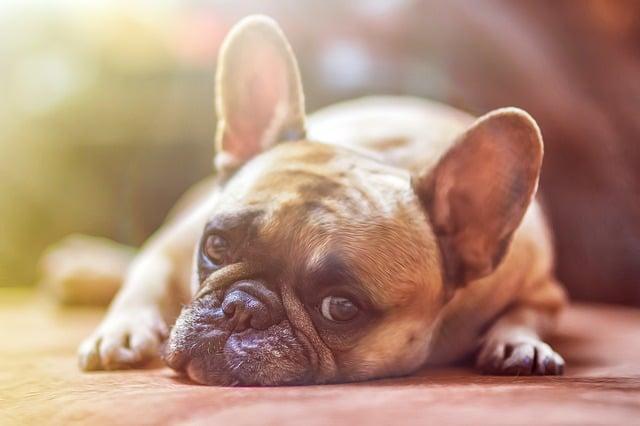 un chien isolé avec un regard triste