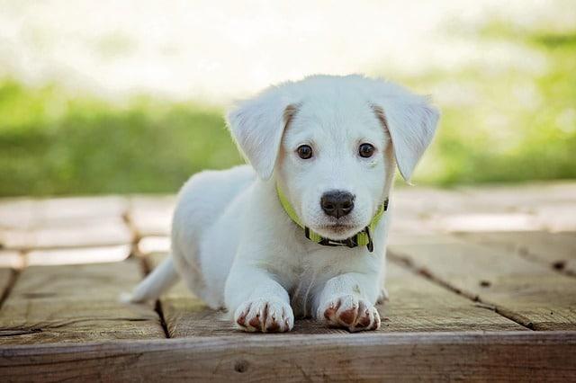 un petit chien assis dehors sur la terrasse