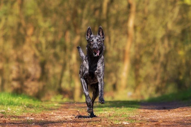 un chien qui court dans la forêt