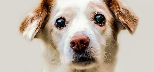 un chien aux yeux humides