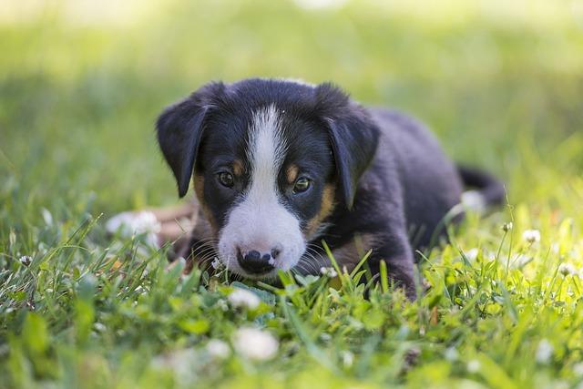 un jeune chiot dans l'herber pret a mordiller