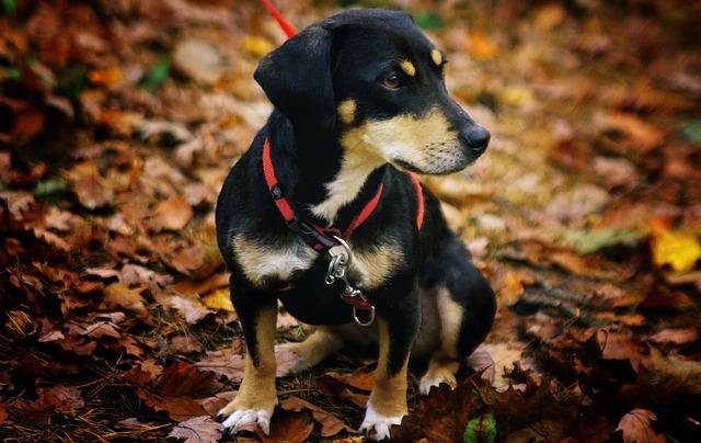 un petit chien avec un harnais