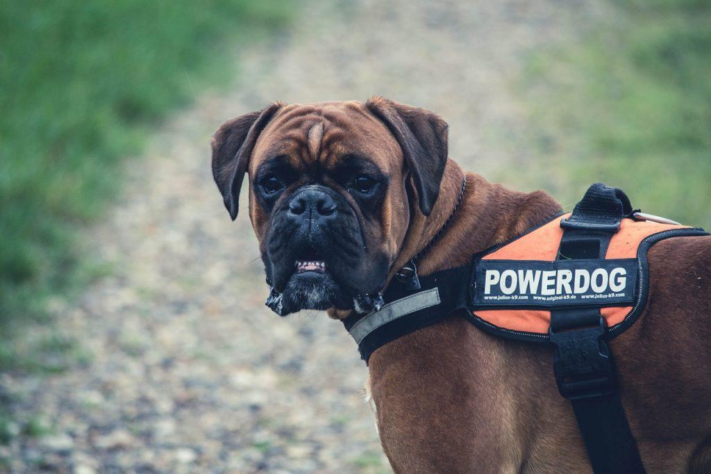 un grand chien sans collier de dressage