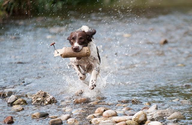un chien sans laisse courant dans la rivière