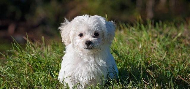 un petit chien sans collier gps