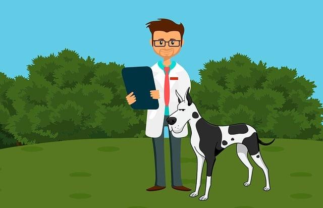 avis vétérinaire collier de dressage